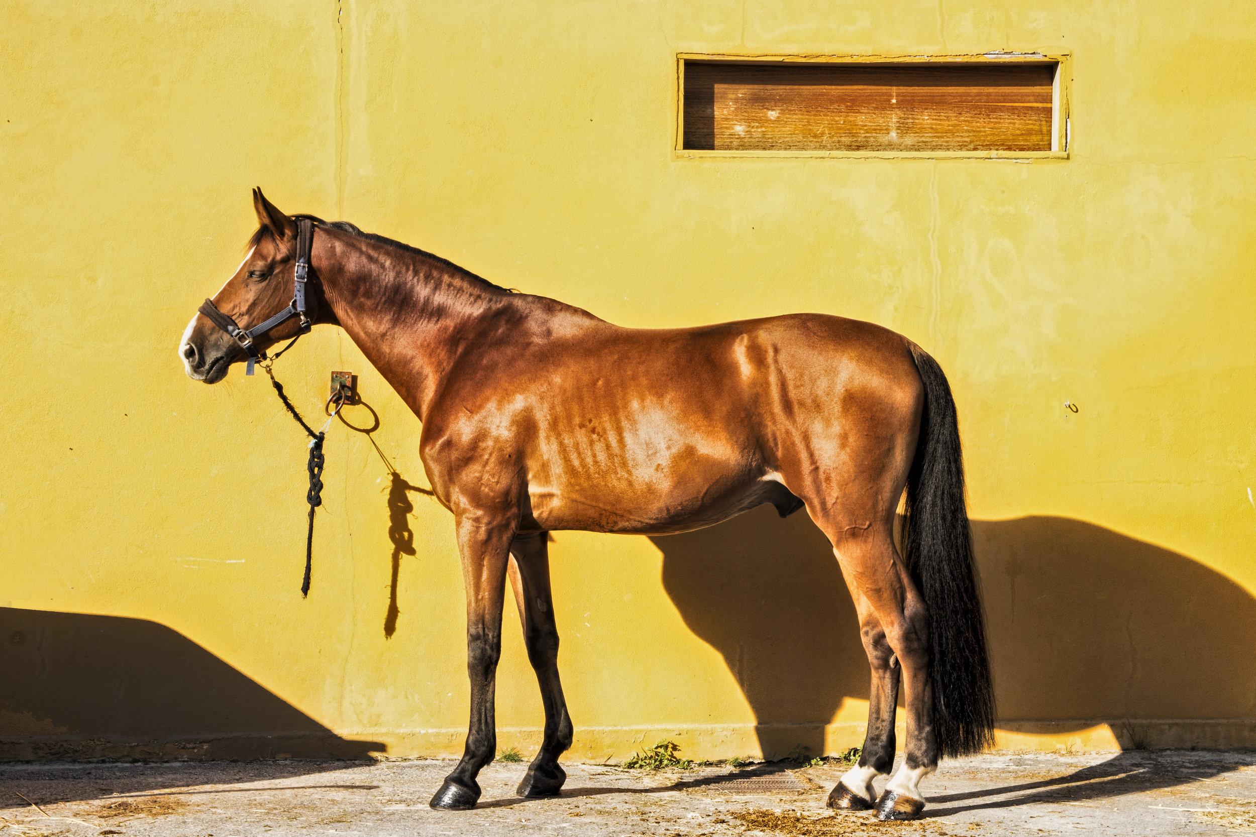 horses photoshoot i - Centro Hípico do Porto e Matosinhos / 2018