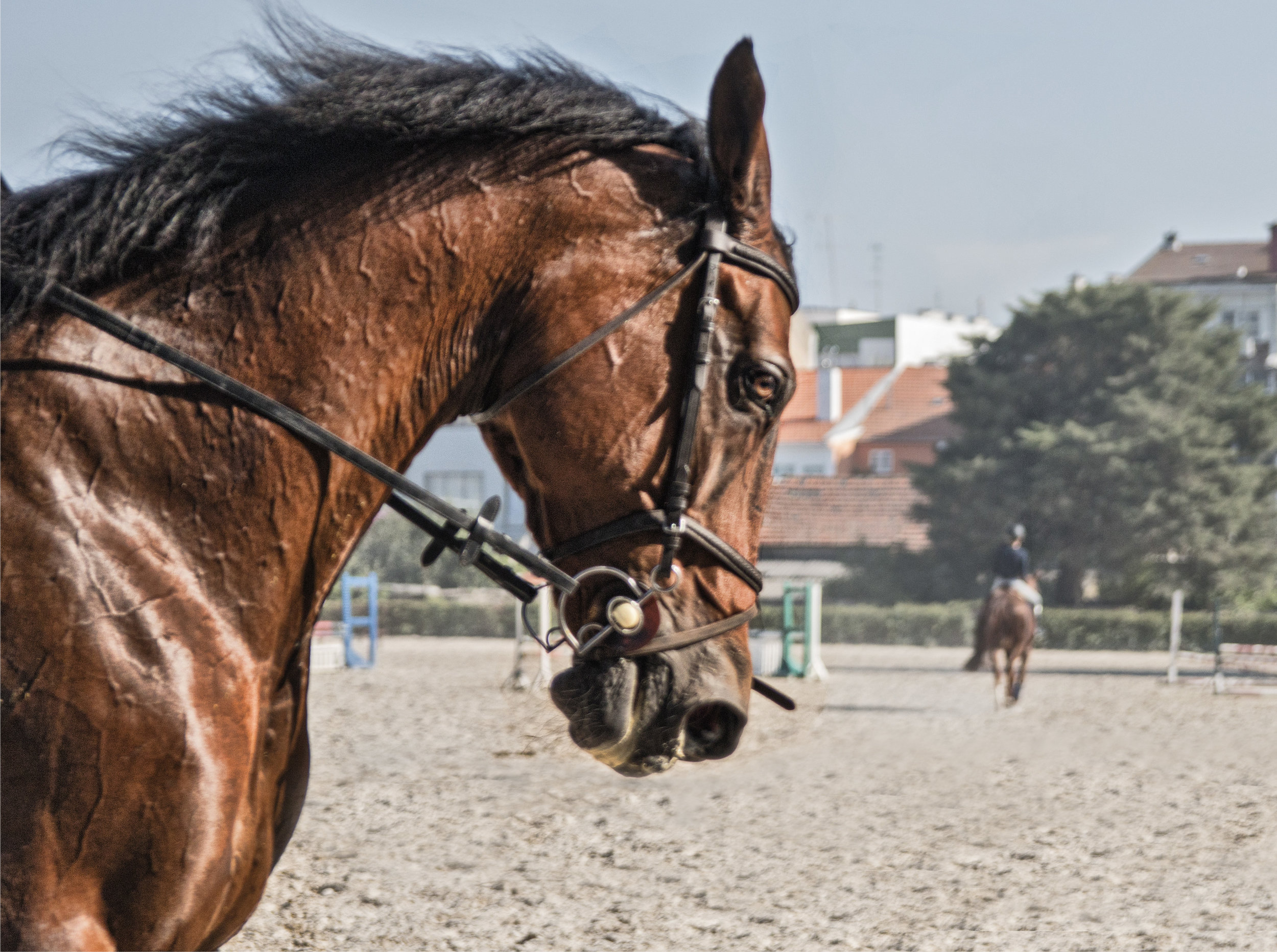 ArzichdaGama_Horses and Equine photography