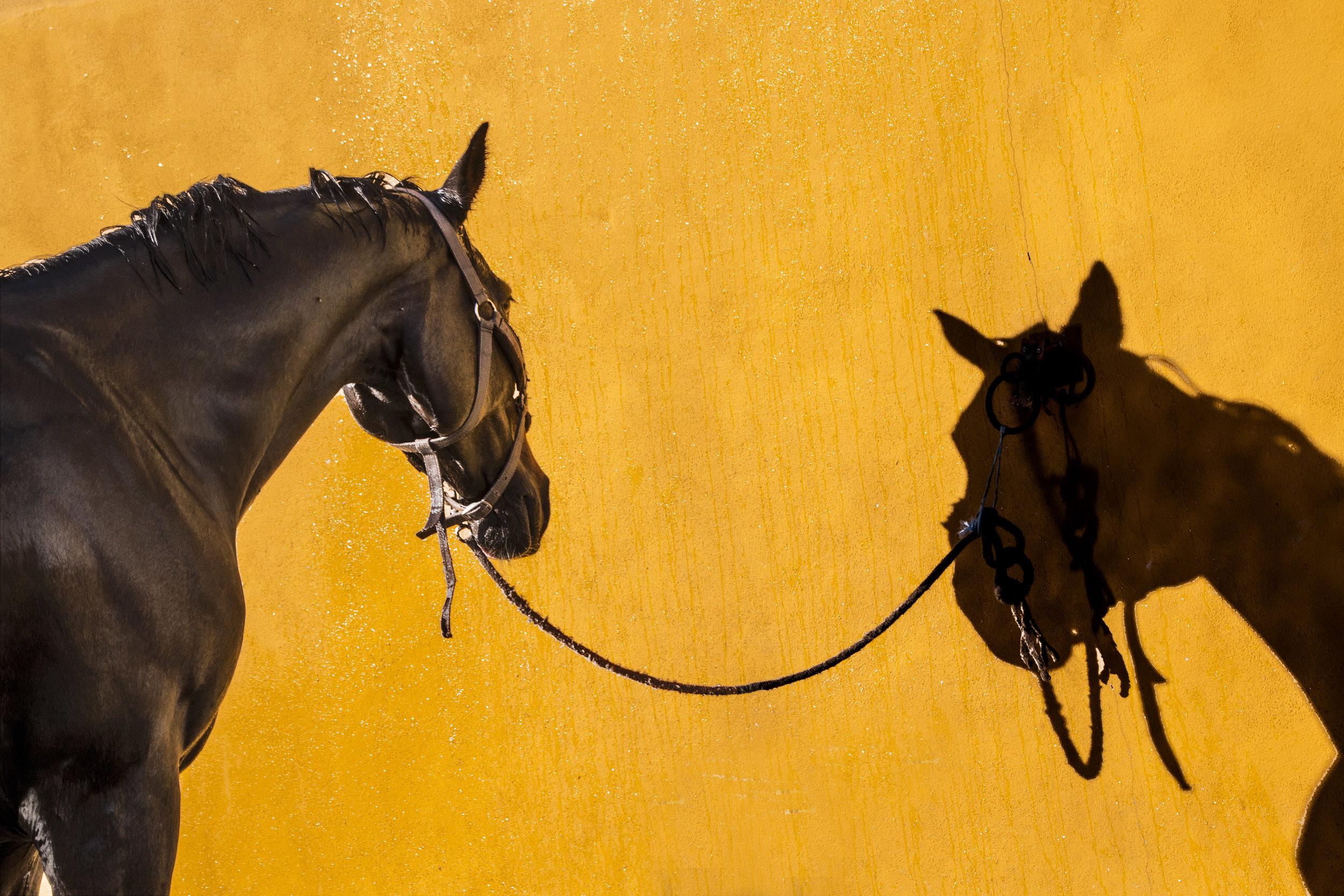 horses photoshoot ii - Centro Hípico do Porto e Matosinhos / 2018