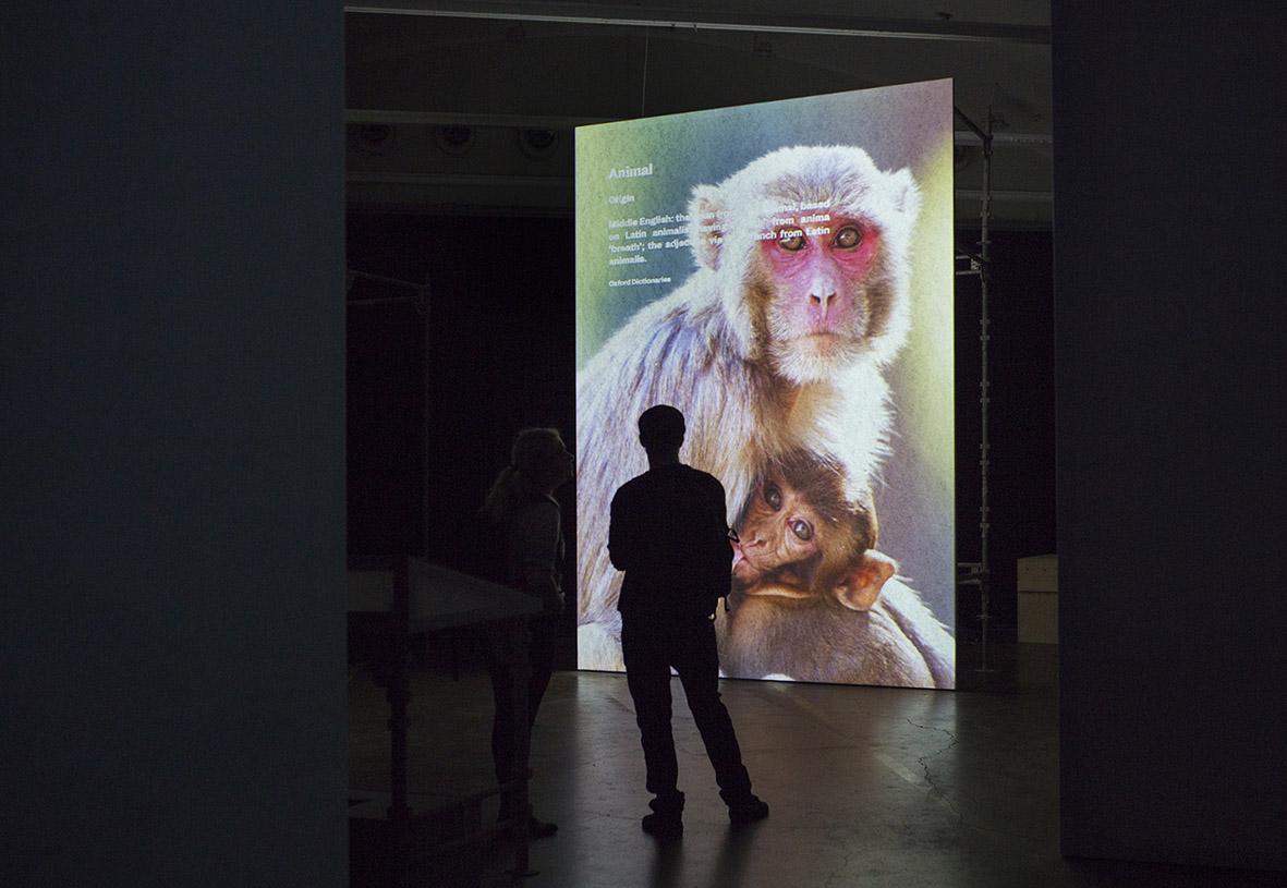 Museum of Nonhumanity,  Gustafsson&Haapoja. Billede: Terike Haapoja.