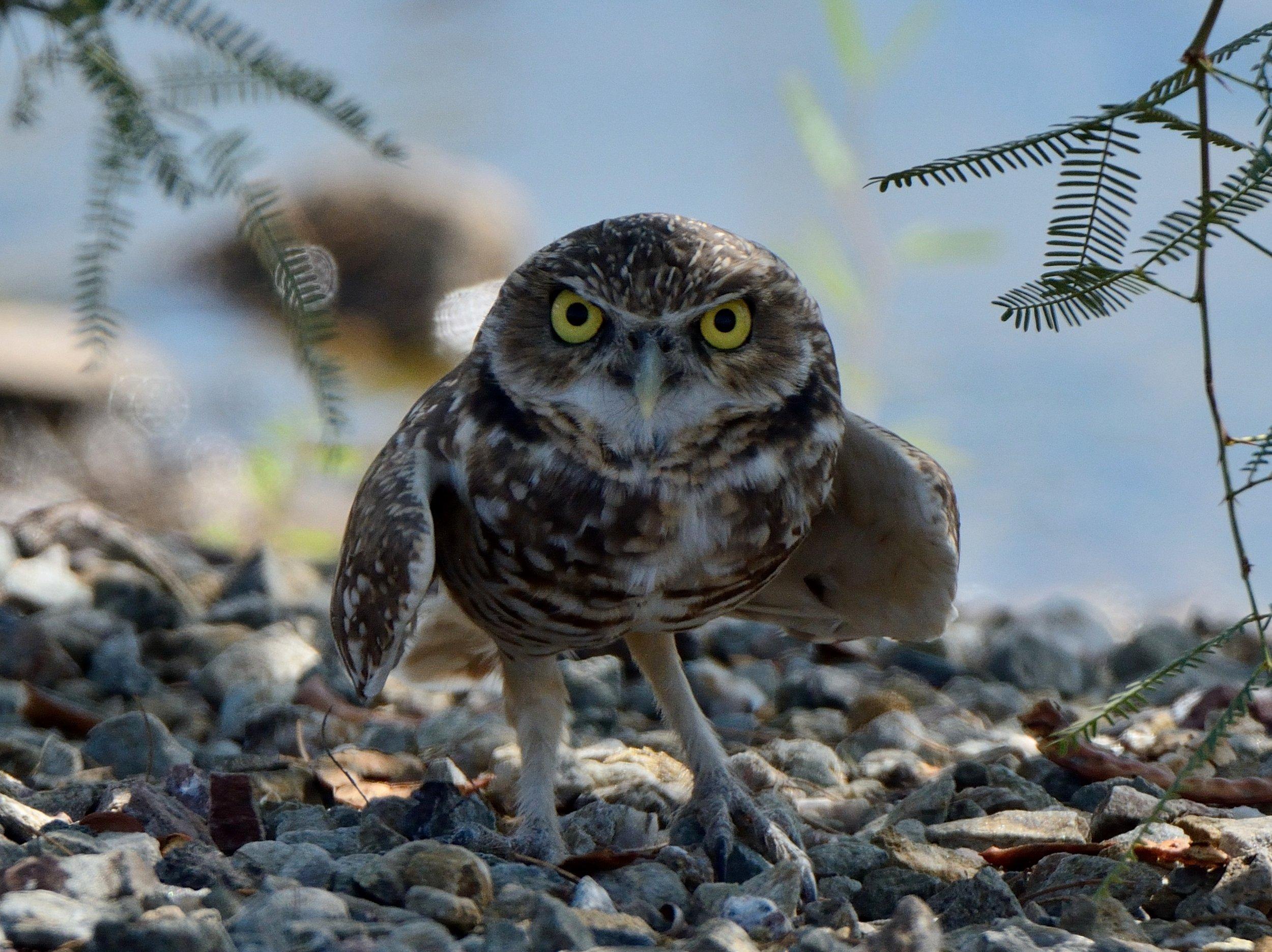 Dine around - blue owl - Tuesday, June 19, 2010