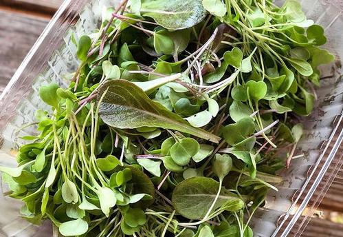 500micro+salads500x344.jpg