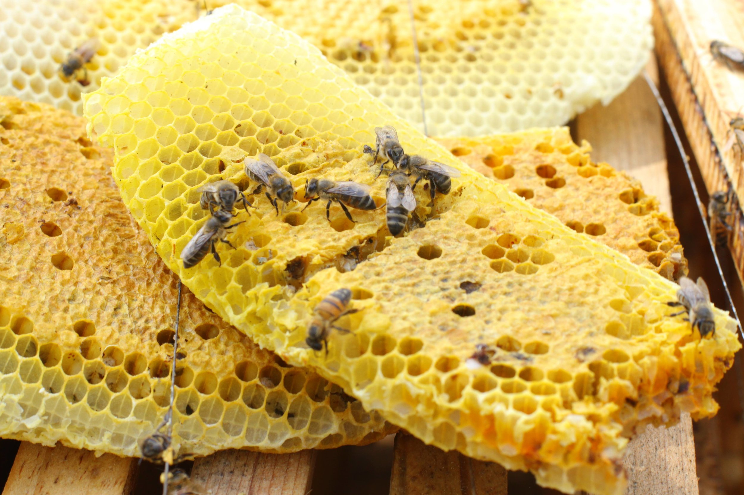 Natural honey was the basis for an intoxicating drink used by the ancient Maya.