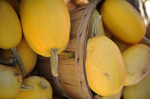 spaghetti-squash-from-munson-farms-at-75th-and-valmount-in-boulder-on-picture-id161219203.jpg