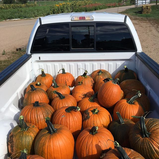 All kinds of new stuff going on at the farm this week! Jack-o-lanterns, 6 winter squash varieties, pie pumpkins, field tomatoes, jalapeño, Anaheim peppers, bell peppers, Jonathan apples, and pears! Stay tuned for much more this upcoming fall season. #munsonfarmsboulder #bcfm #shoplocal #supportsmallbusiness #supportyourlocalfarmers