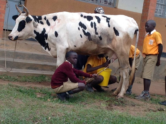 milking-th-cow.jpg