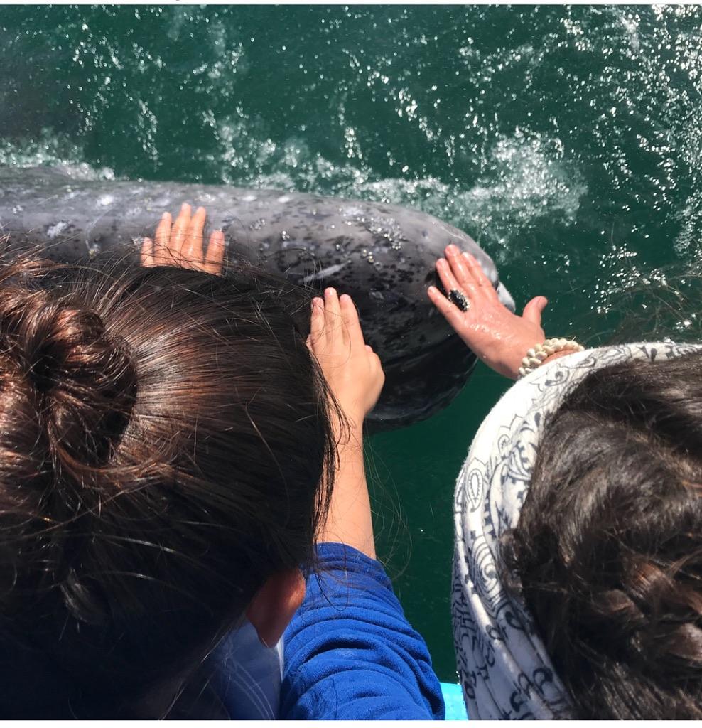 1_whale.jpg