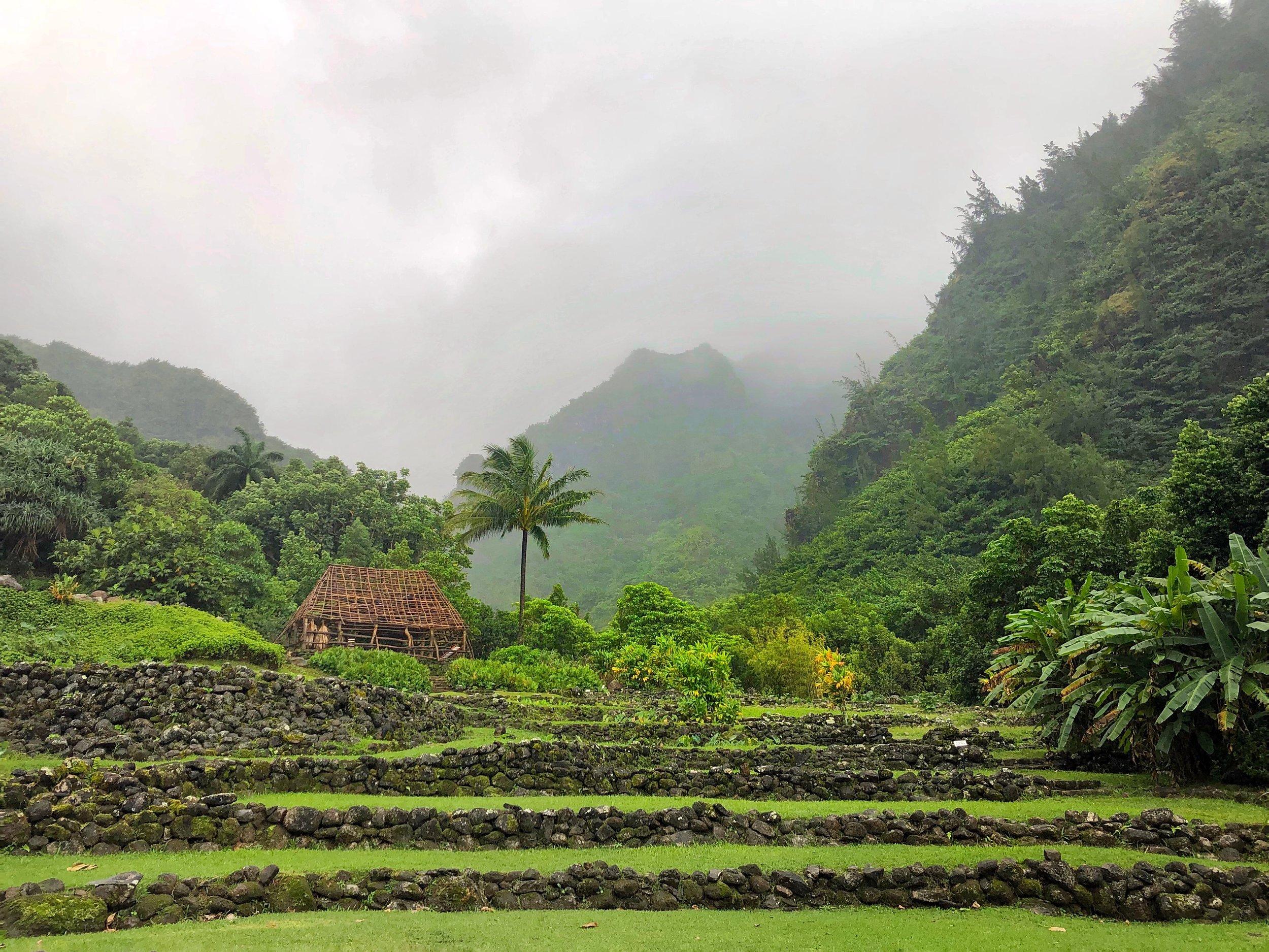 limahuli kauai.JPG