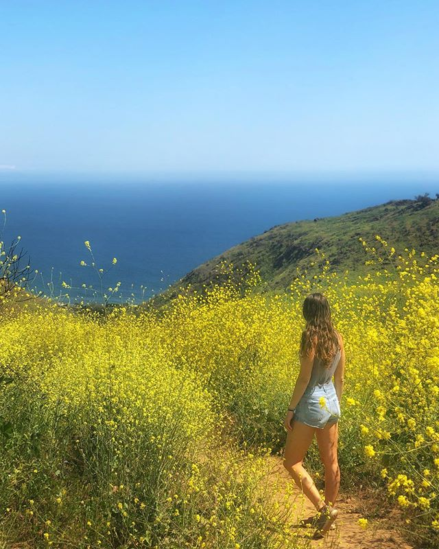 i've never seen southern california so lush and green 😭🌿🌼 it was so beautiful to witness the abundance of plants, animals & flowers after the fires that swept malibu 💚 a sweet reminder of life's cyclical nature..