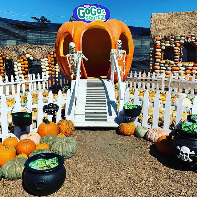 #TBT to our fantastic #GoGoWeen event for @gogosqueez earlier this week at Mr. Bones pumpkin patch (@mrbones ). Pictured above is one of several photo ops we created for guests to enjoy, snap and tag. Special thanks to @jamie_hausch and @thirdbiggs for their impeccable design skills. 🎃 📸: @samirabashout  #gogosqueez #healthy #snacks #onthego #influencermarketing #photoops #pumpkinpatch #pumpkins #mrbonespumpkinpatch #losangeles #events #eventdesign #design #decor #inspo #teamwork #fall #tistheseason #activations #brandactivation #productlaunch #bianchiproductions #inspire #beinspired #create #collaborate