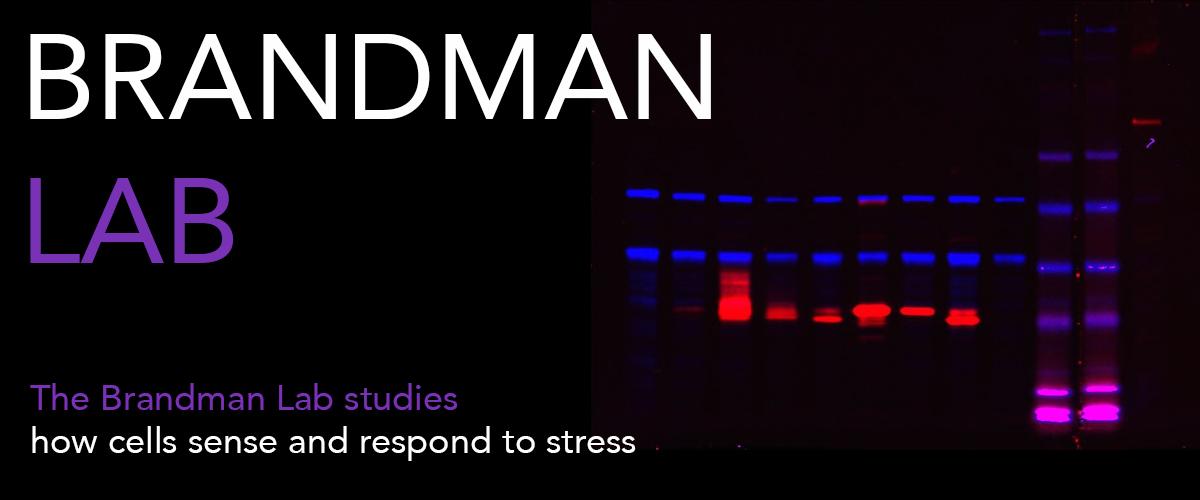 Brandman-Lab-Cover-big.jpg