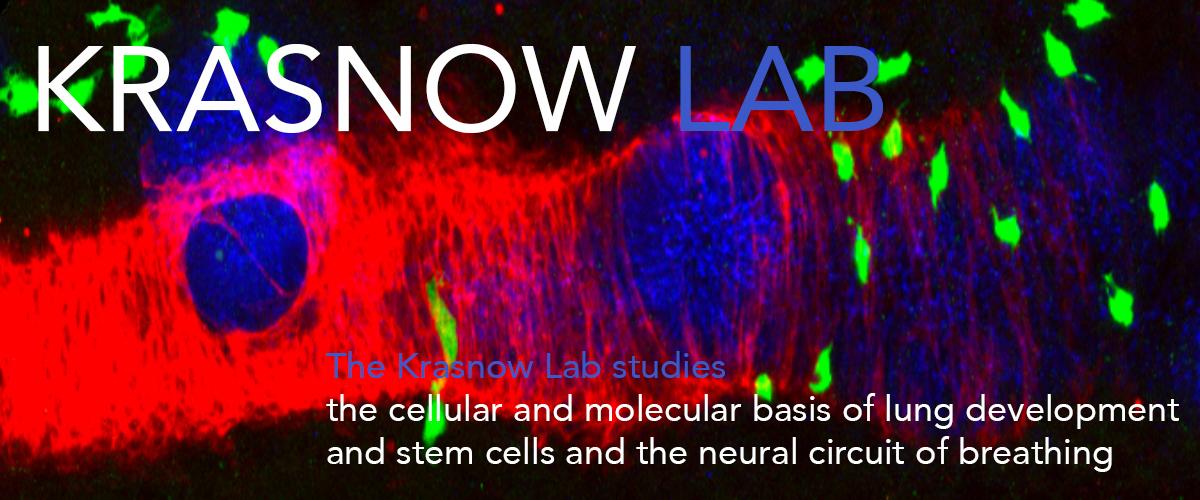 Krasnow-Lab-Cover-big.jpg