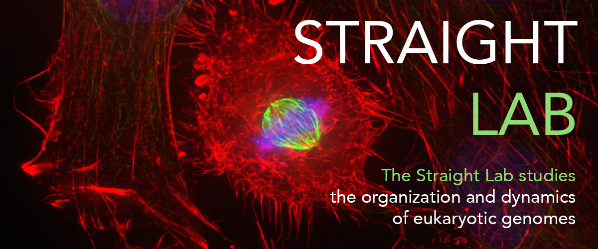Straight-Lab-Cover.jpg
