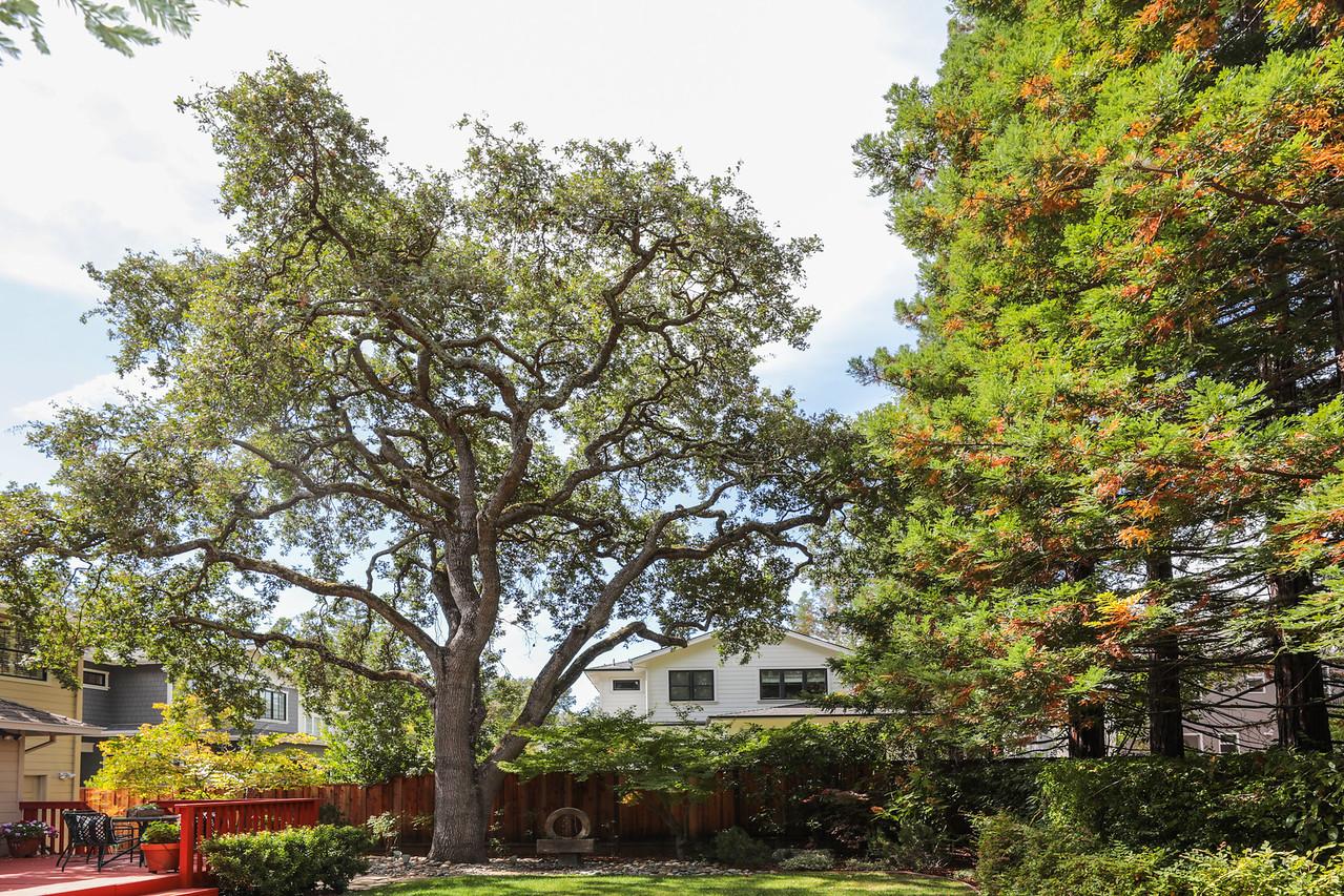 1770 Stockbridge Ave Redwood City Blu Skye Media-6749-Edit-X2.jpg