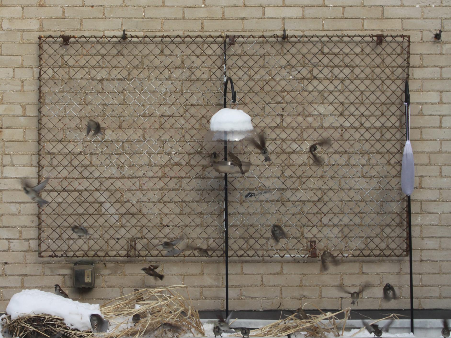 3-sparrows.jpg