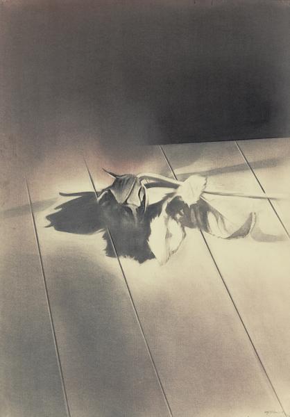 A rose is a rose is a rose is a rose II, 2013 Charcoal on paper, 100 x 50 cm