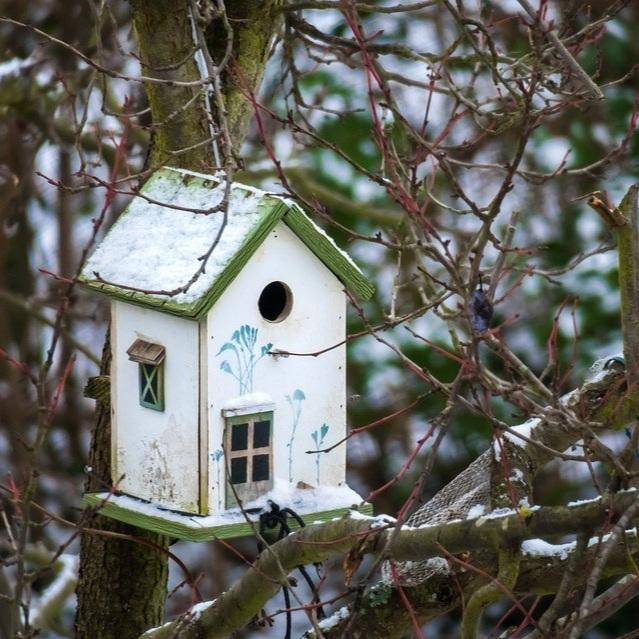 bird-feeder-3878421+-+small.jpg