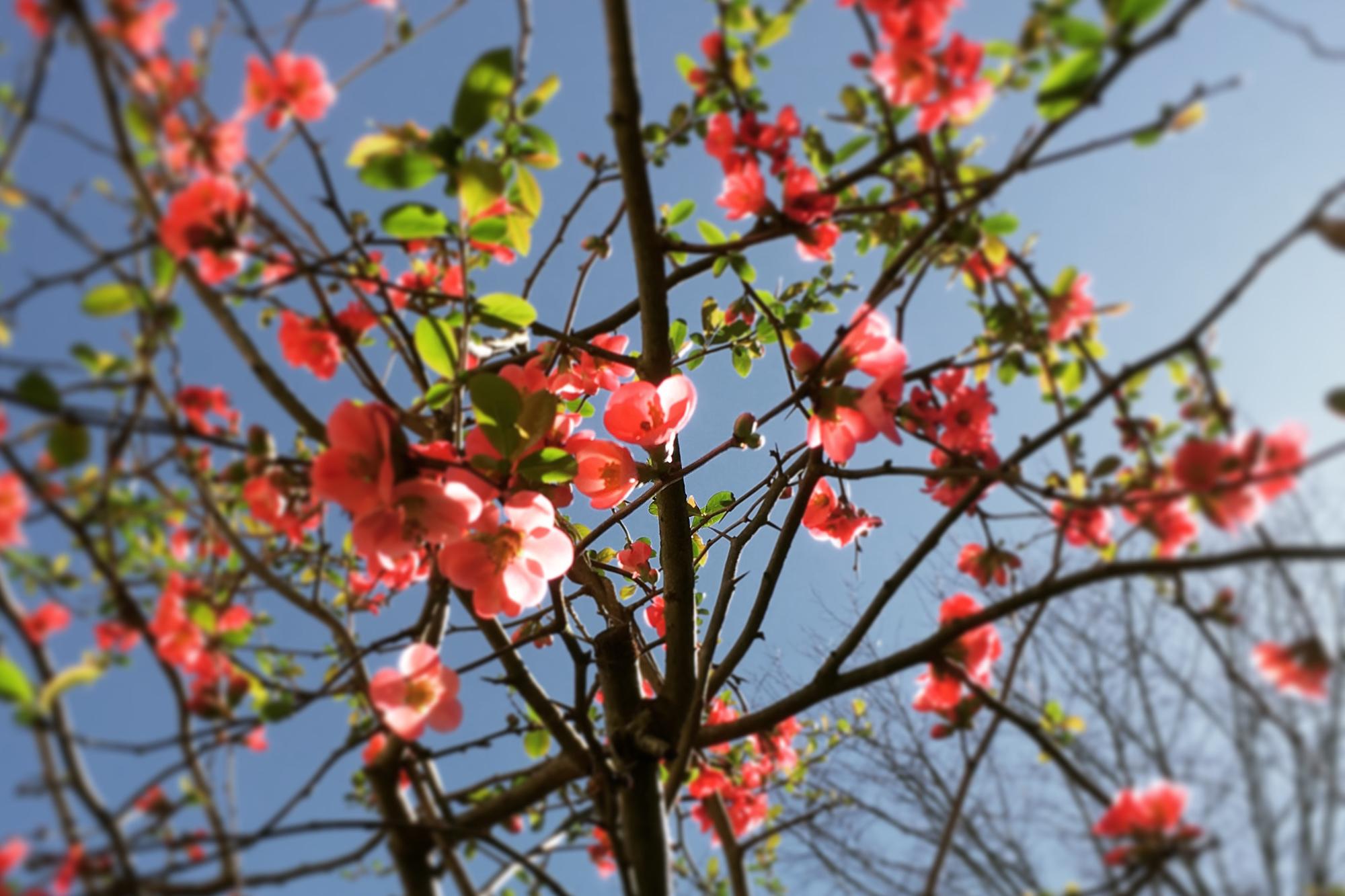 SpringFlowers.jpg