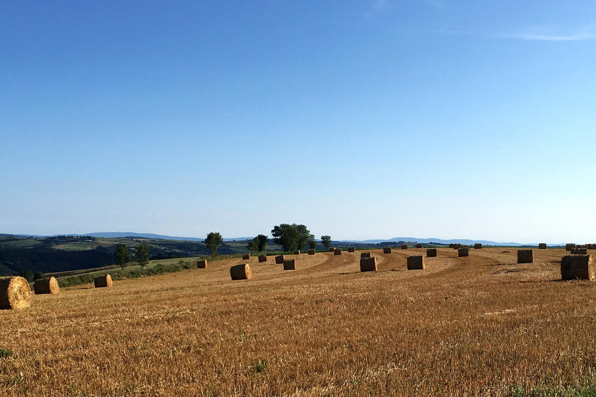 Field_Straw.jpg