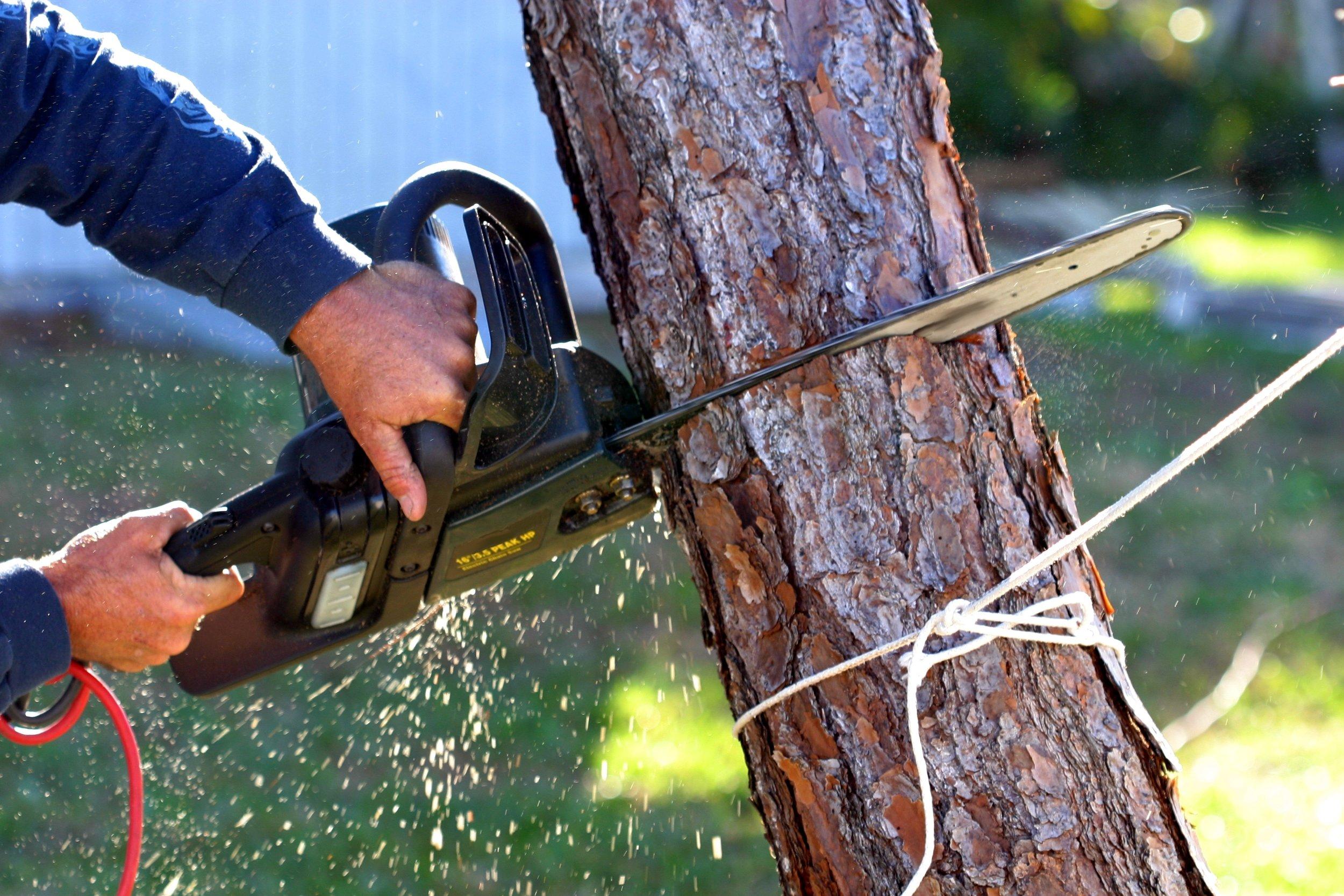 AHS-Tree-Removal-Service.jpg