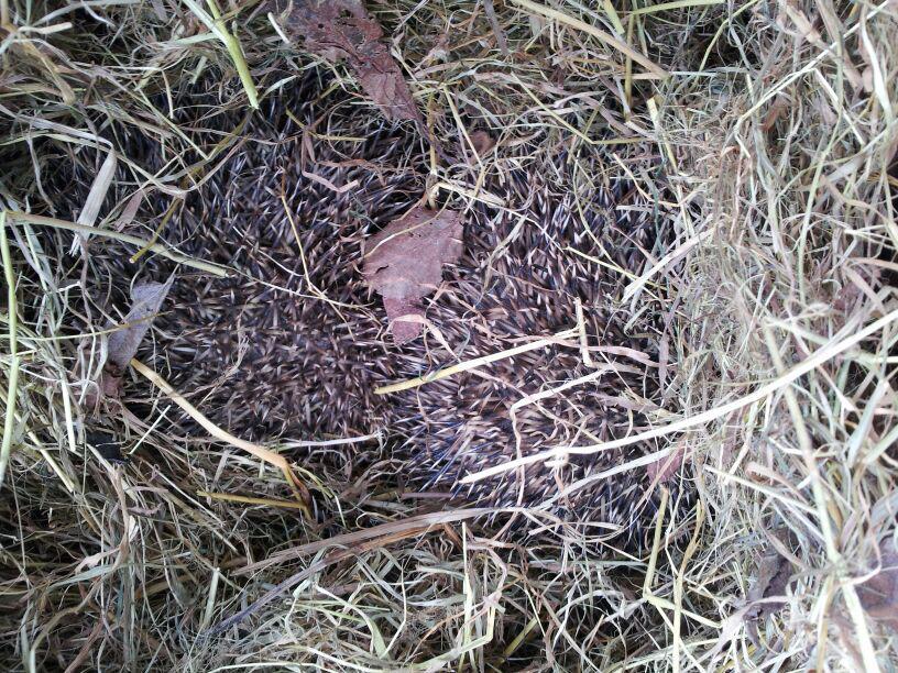 Disturbed nest.jpg