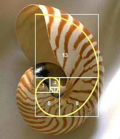 GR spiral Nautilus.2.jpg