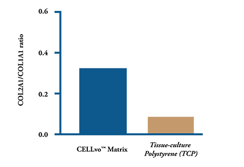 Dedifferentiation is characterized by an increased expression of fibroblast marker (type I collagen) and a decreased expression of chondrocyte markers (type II collagen and aggrecan)Relative gene expression in HAC cultured on CELLvo™ Matrix and tissue culture polystyrene for a similar PDL. The ratios of COL2A1/COL1A1 of P0 cells were calculated as described in the Materials and methods section. Data are presented as mean ± SD (n = 4, *p < 0.05, **p < 0.01 and ***p < 0.005).