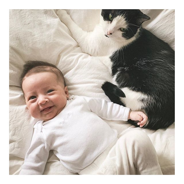 How can it be that you're already 8 weeks old... ❤️ #catsandbabies