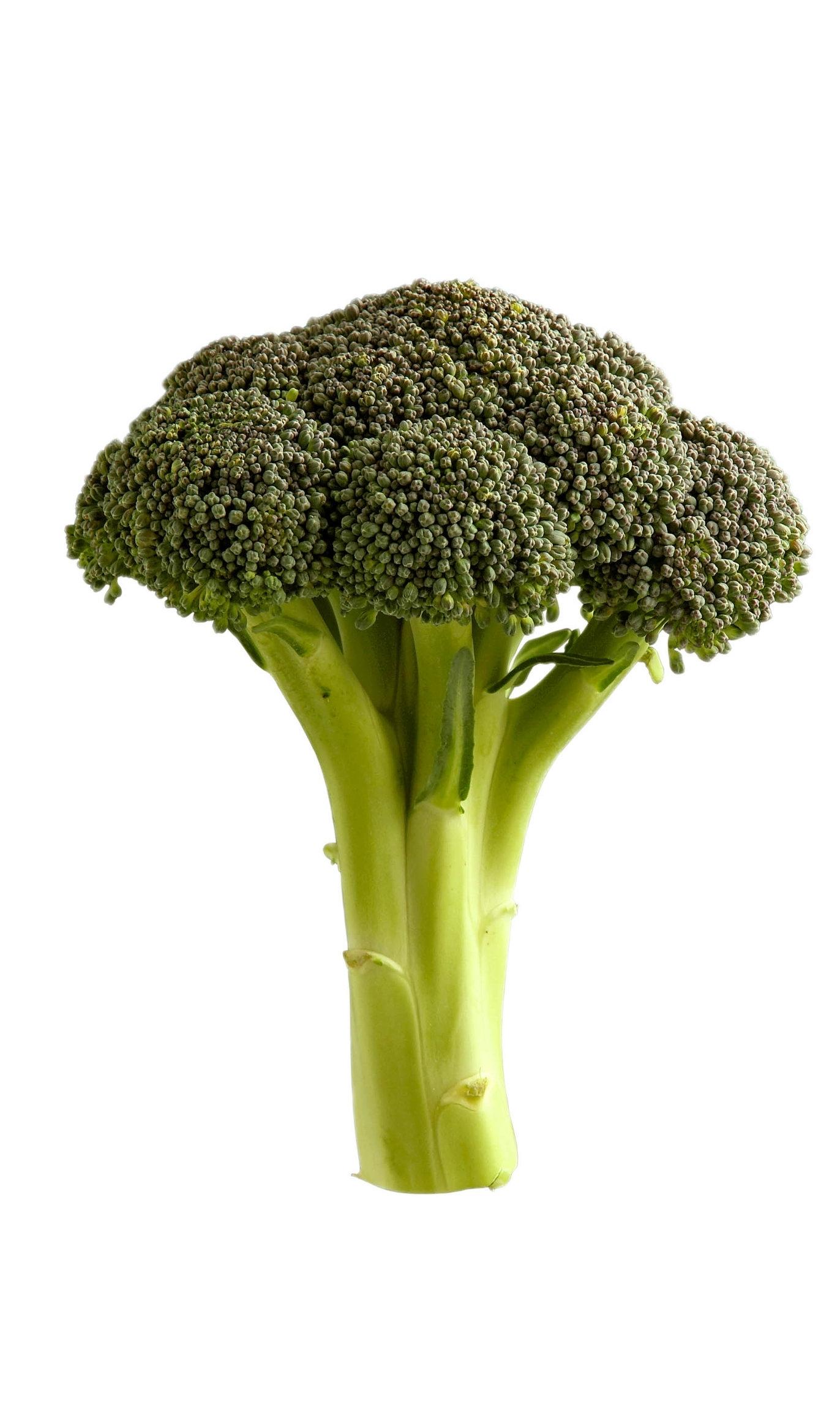 Final_broccoli-copy-WEB.jpg