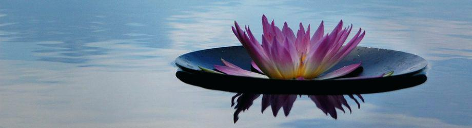 zen-relaxation-zen-mind-relaxing-meditation-music-mp3-free-download.jpg