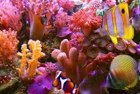 ocean coral.jpg