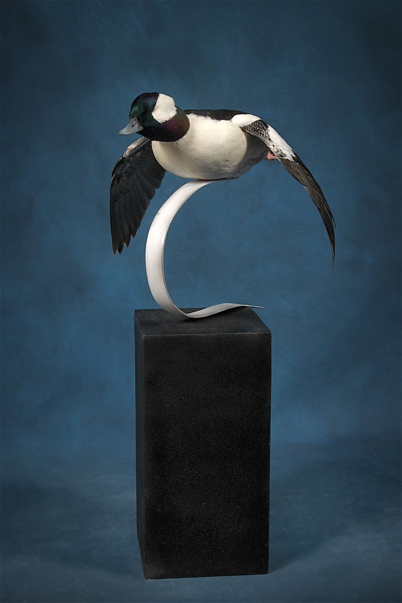 Mark Hernandez 2018 Bufflehead - Best of Category Professional WaterfowlBest of Show Professional Devision