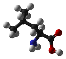 220px-Leucine-ball-and-stick.png