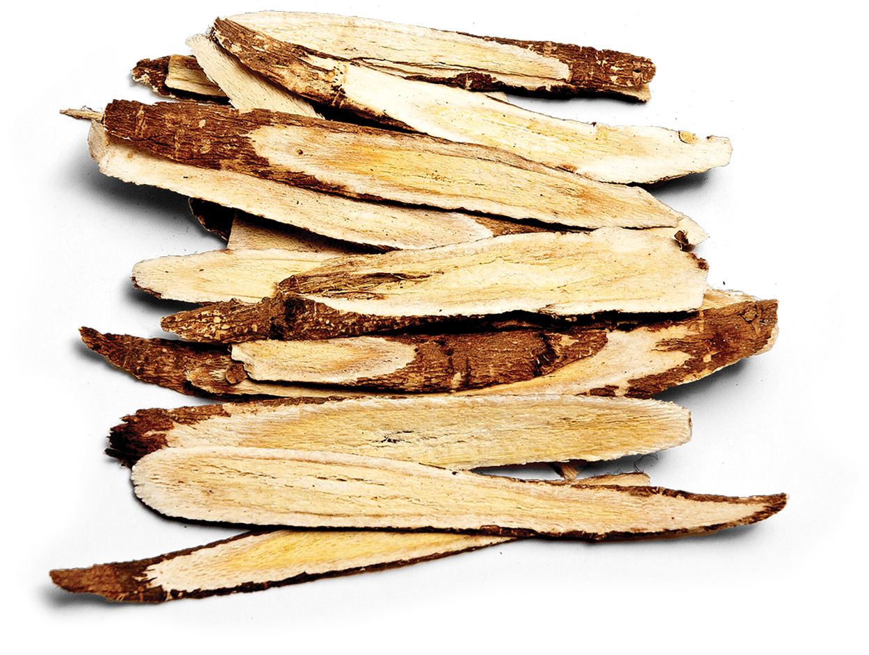 astragalus-slices.png
