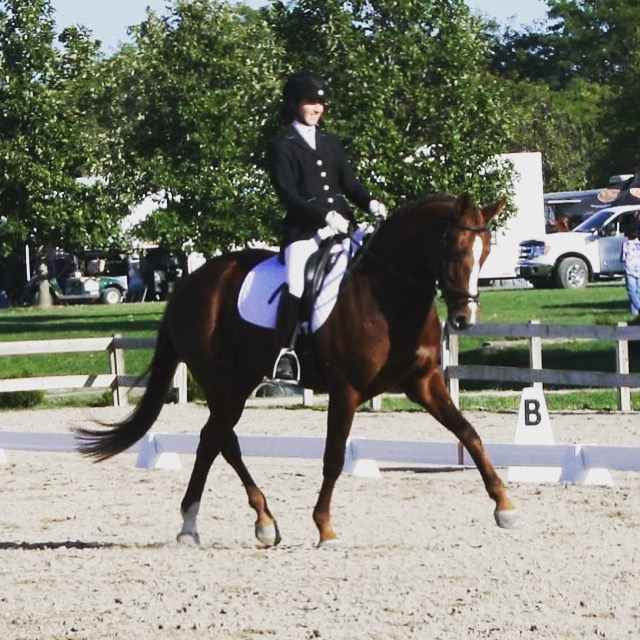 What is Dressage? - Learn about Dressage