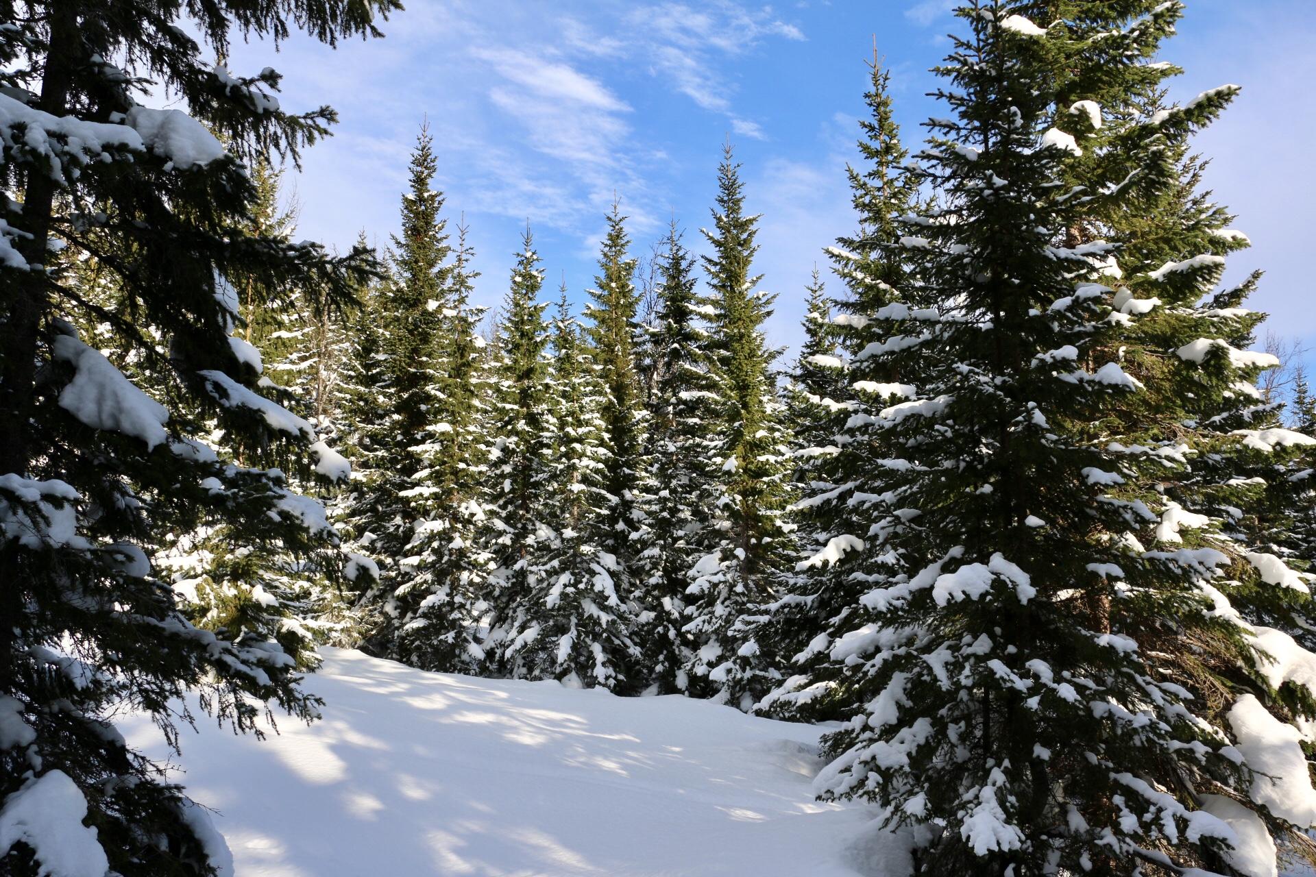 Flott tett skog med magisk stemning