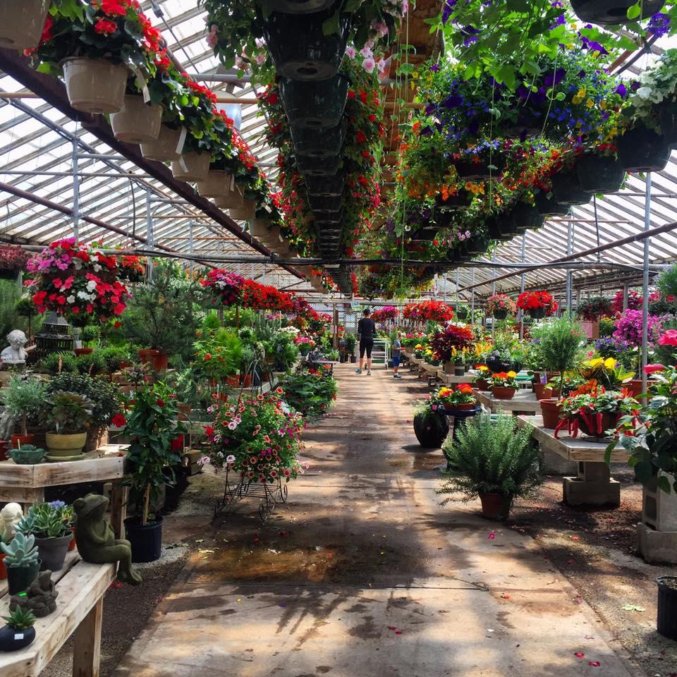 The Flower Source - W156N11124 Pilgrim Rd, Germantown, WI 53022(262) 251-7673
