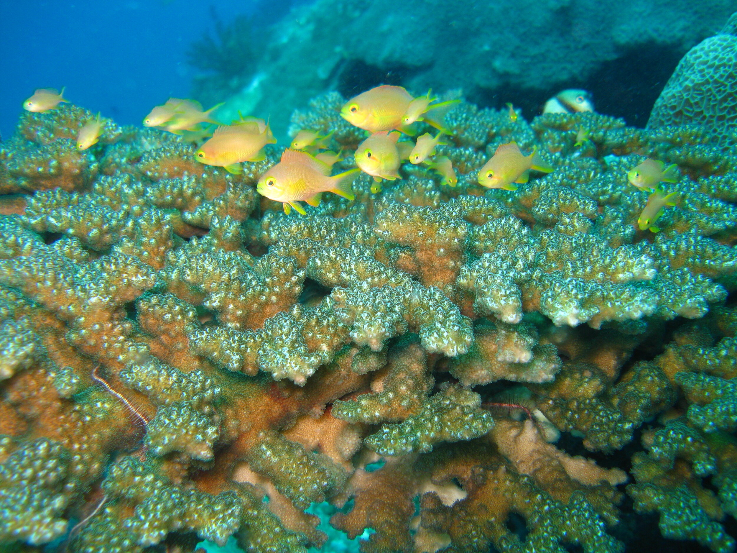 Marine motions for WCC    Learn more