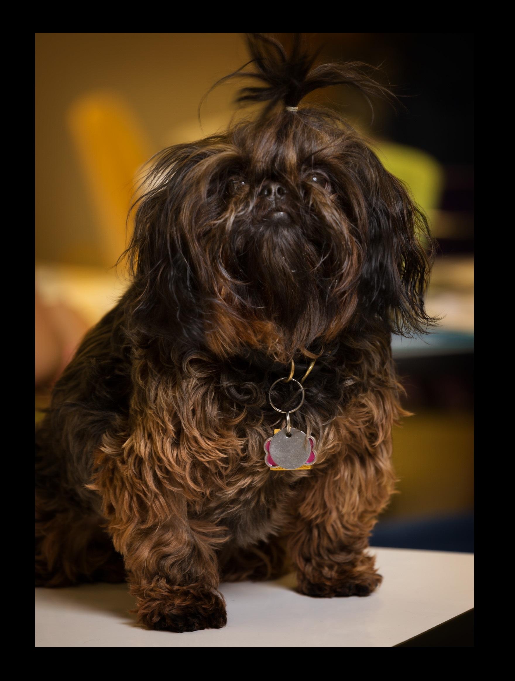 Catori  Academy Puppy♥ -