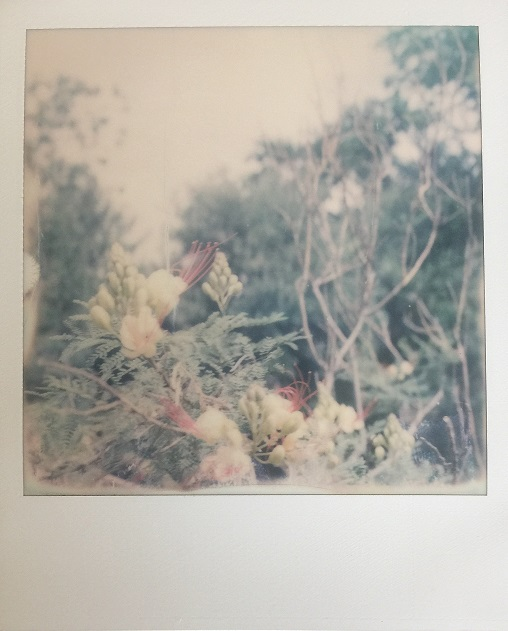 Untitled, 2017. Ginger Cochran, SX-70 land camera.