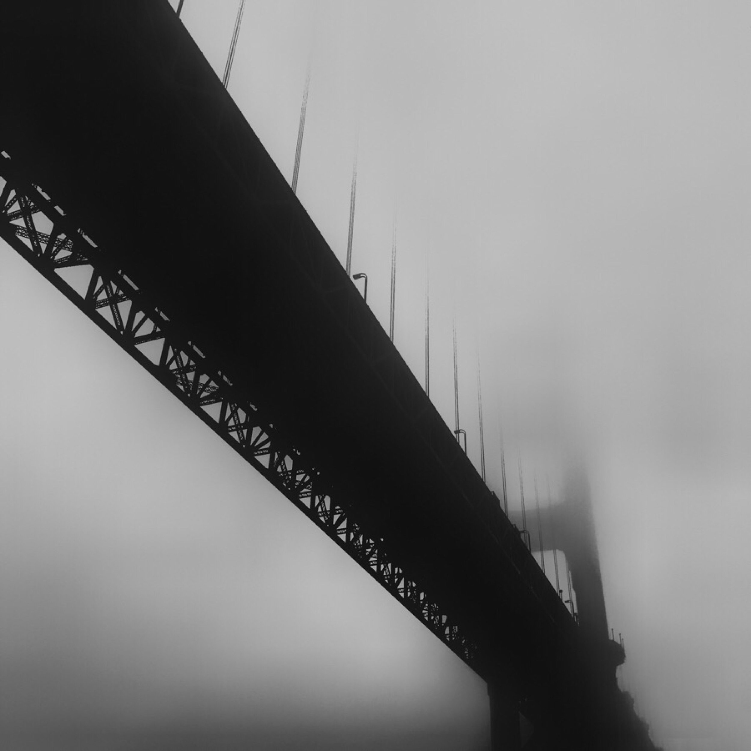 Fog City, 2018. Photograph by Lisa Waddell