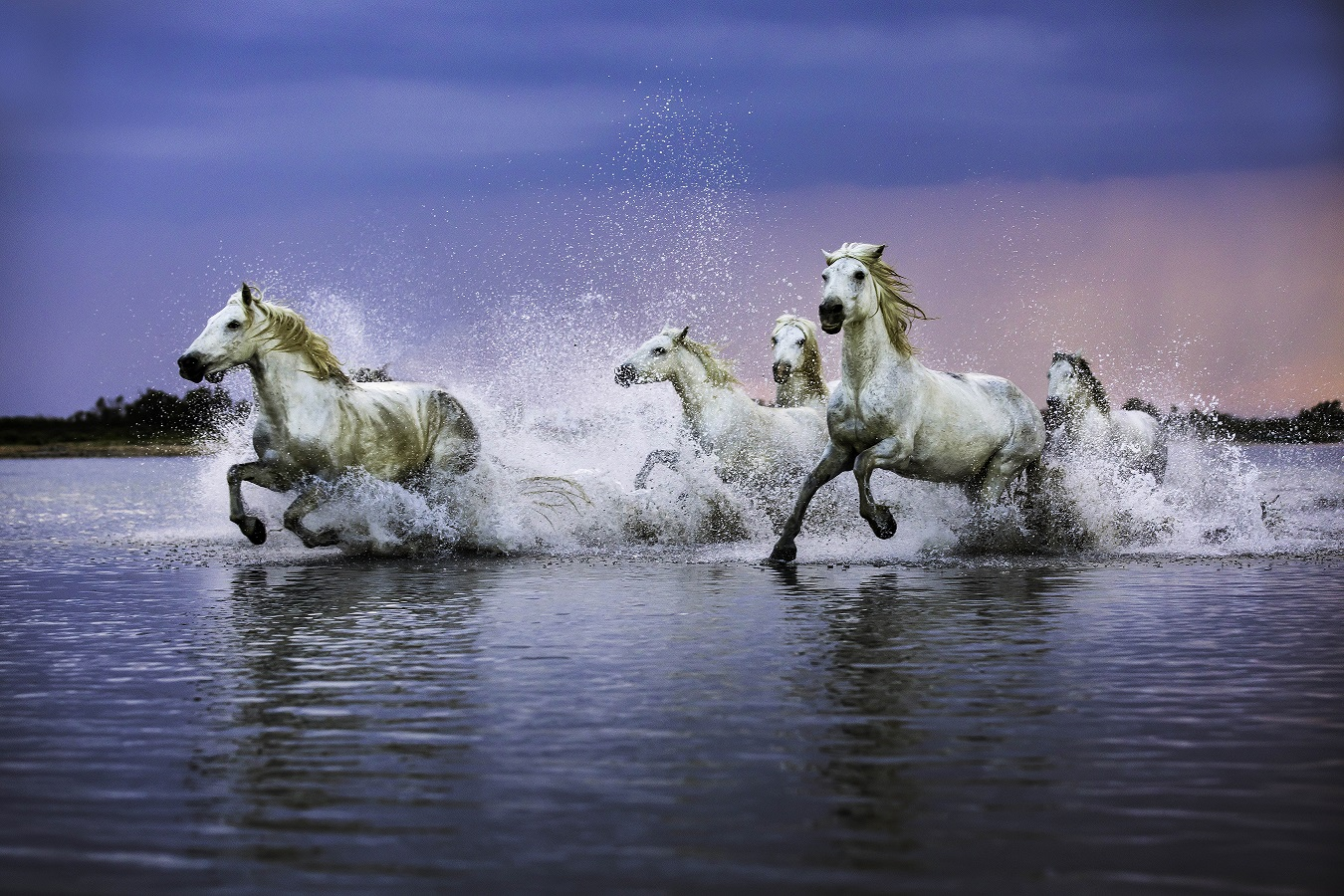 Horses of the Sea, 2018 Photography, 24 x 36 inches, $975