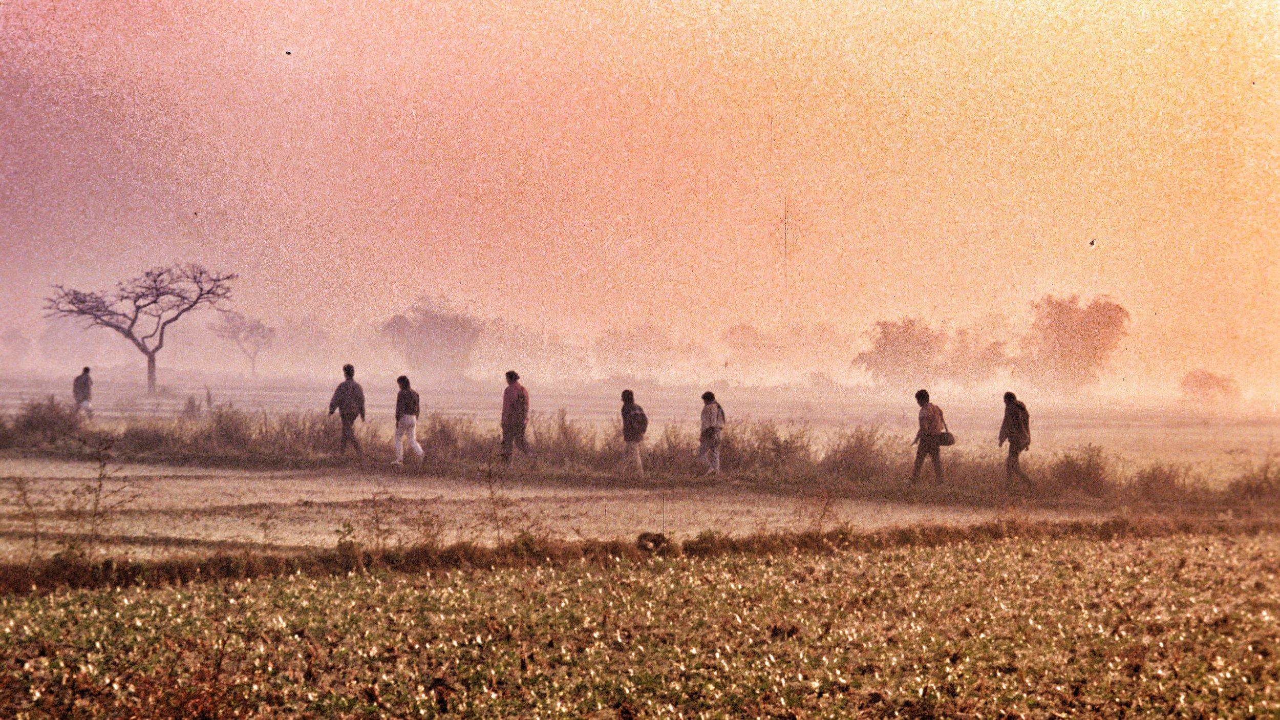 Nepali Paddy Field