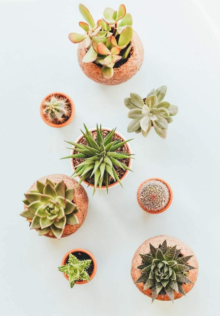 4 Easy and Beautiful Houseplants for Your Home-03