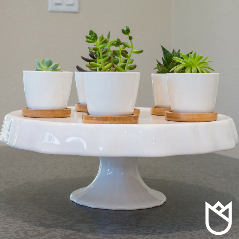 A pie plate topped with little succulents plants looks like succulents cupcakes to me!
