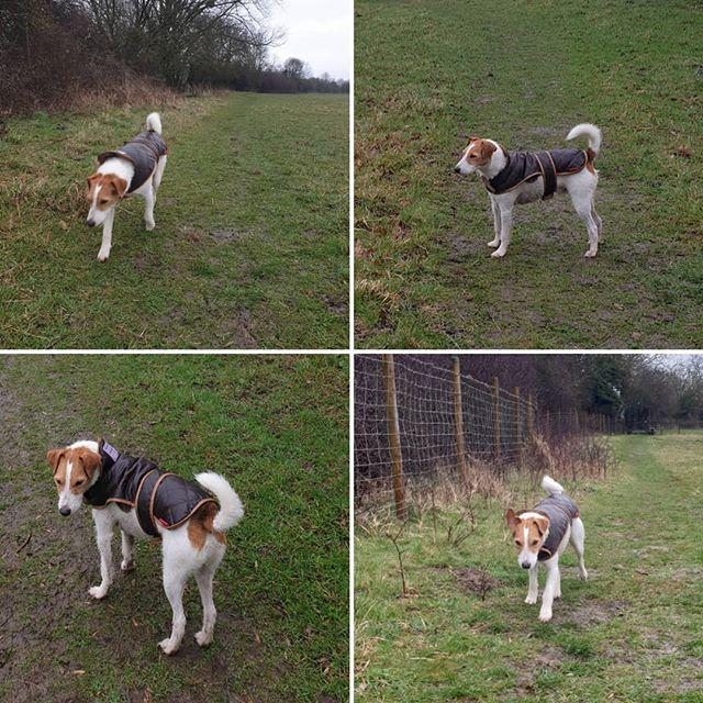 Wet walk #parsonsterrier #dogwalking #dogsofinstagram
