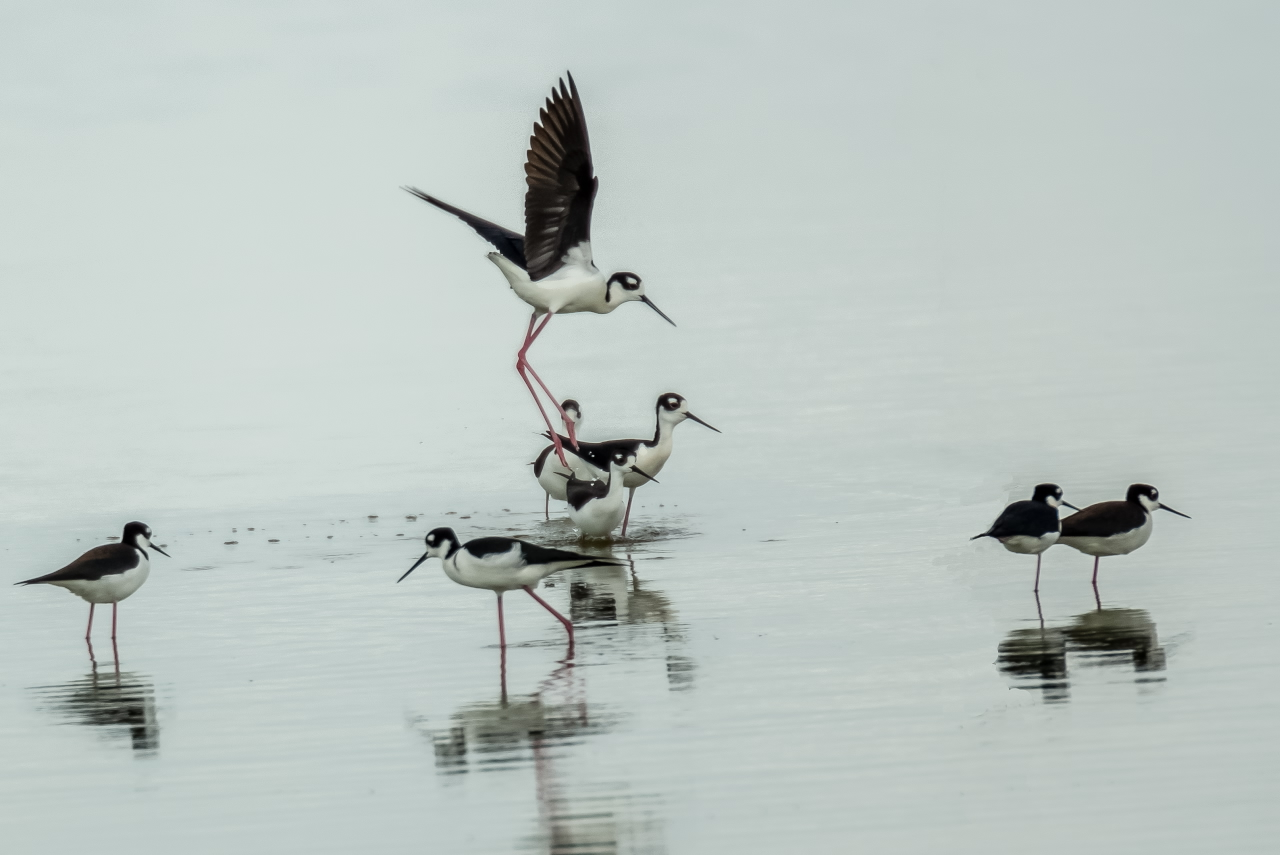 Stilts produce a study in black and white (Photo 6)