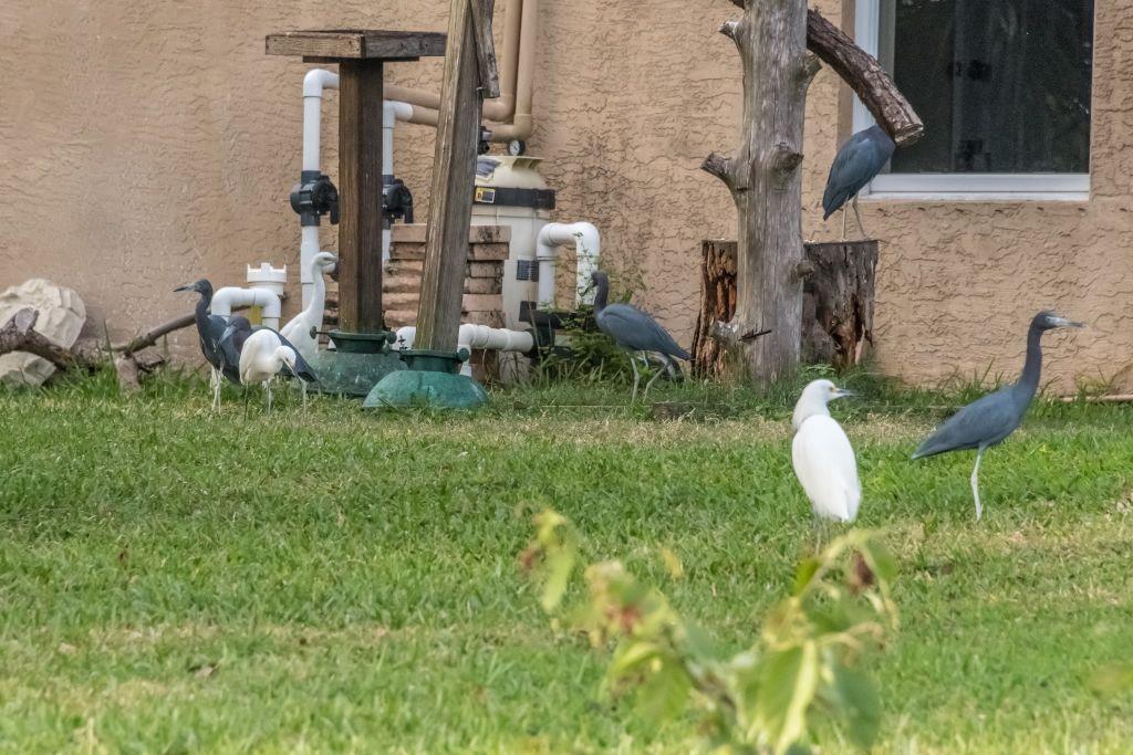 Mixed Herons & Egrets