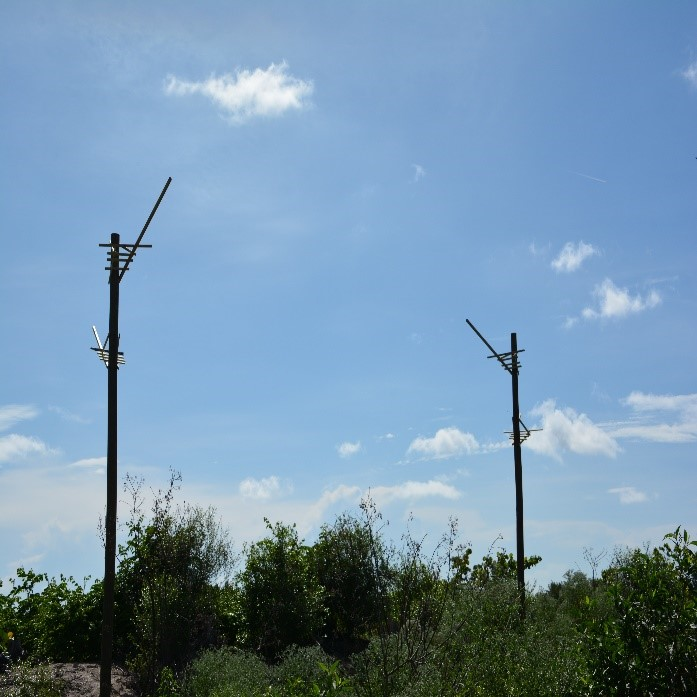 Great Blue Heron poles
