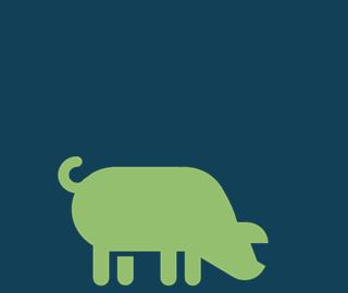 pig-sq.jpg